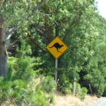Kangaroo are everywhere - Кенгуру везде