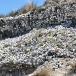 Shore made of shellls - Берег из ракушек