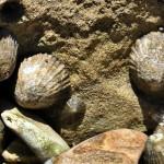 Shells - Ракушки