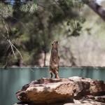 Some OZ fauna - Австралийская фауна