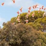 Parrots - Попугаи