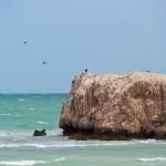 Pelican's island - Пеликановый остров