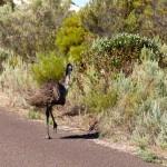 Ostrich running away from my camera - Убегающий от камеры страус