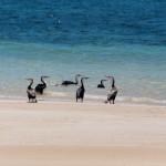 Some sea birds - Какие-то морские птицы