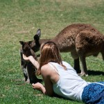 Feeding wallabies - Подкармливаю валлаби