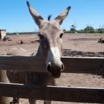 Cute donkey - Симпатичный ослик