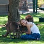 Hugging a wallaby - Обнимаю кенгурятину