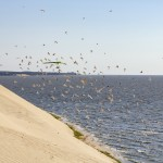 One fat seagull detected ~ Обнаружена жирная чайка