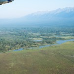 Somewhere you have to fly over a lot of forest ~ Местами нужно перелететь много леса