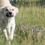 Sasha's cute dog ~ Сашин милый пёс