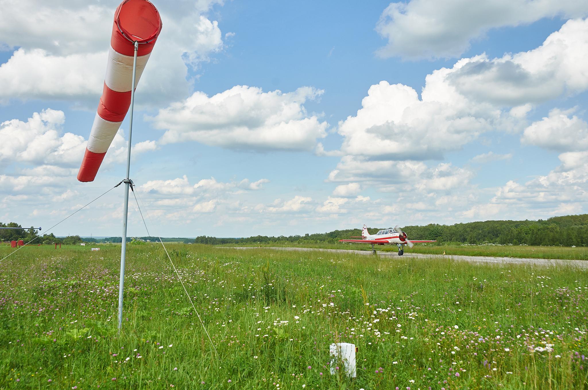 Flowers, runway and Andrey in the Yak-52 ~ Газон в цветах, взлётная полоса и Андрей в Яке