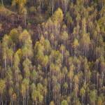 Flying over the Autumn gold ~ Над золотой осенью