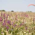 At the landing field ~ На посадке